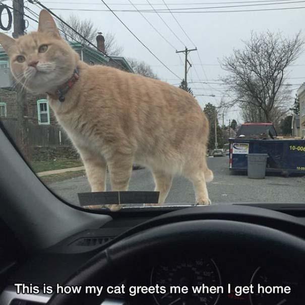 Γάτες που... κάνουν τα δικά τους! #43 (3)