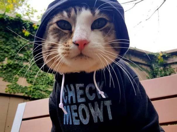 Γάτες που... κάνουν τα δικά τους! #43 (4)