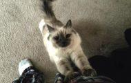 Γάτες που ξέρουν πως να τραβήξουν την προσοχή