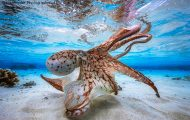 33 από τις κορυφαίες υποβρύχιες φωτογραφίες της χρονιάς (1)