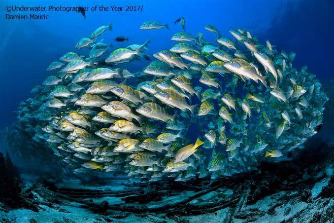 33 από τις κορυφαίες υποβρύχιες φωτογραφίες της χρονιάς (7)