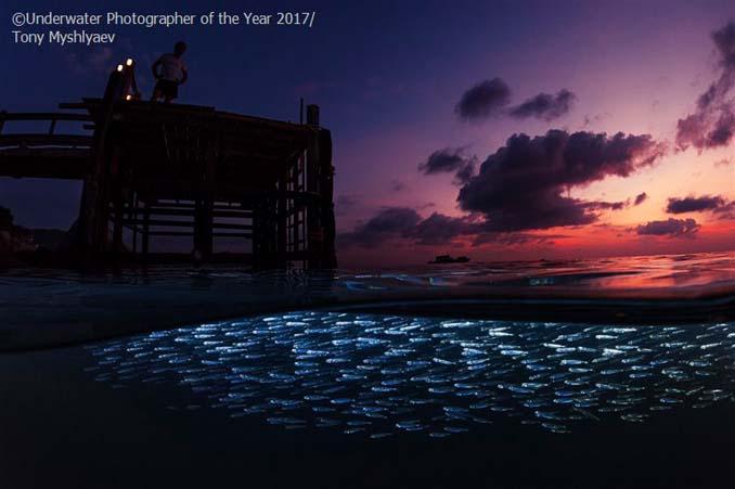 33 από τις κορυφαίες υποβρύχιες φωτογραφίες της χρονιάς (8)