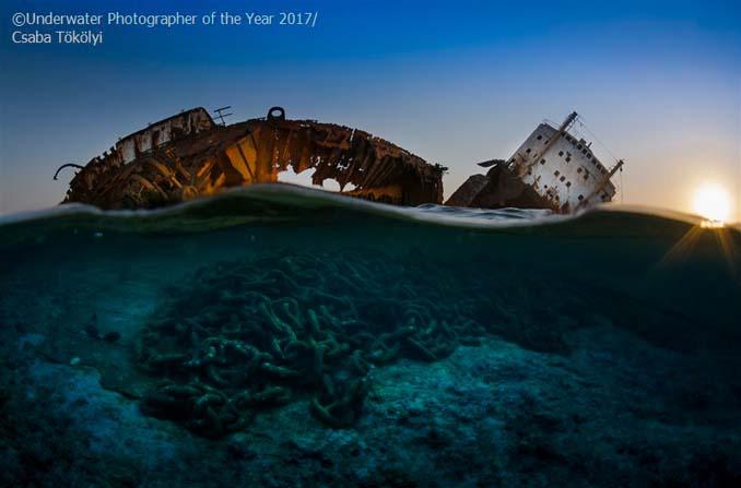 33 από τις κορυφαίες υποβρύχιες φωτογραφίες της χρονιάς (14)