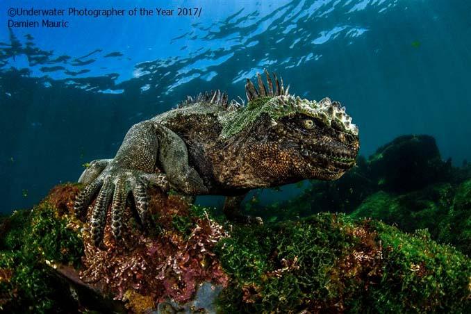 33 από τις κορυφαίες υποβρύχιες φωτογραφίες της χρονιάς (21)