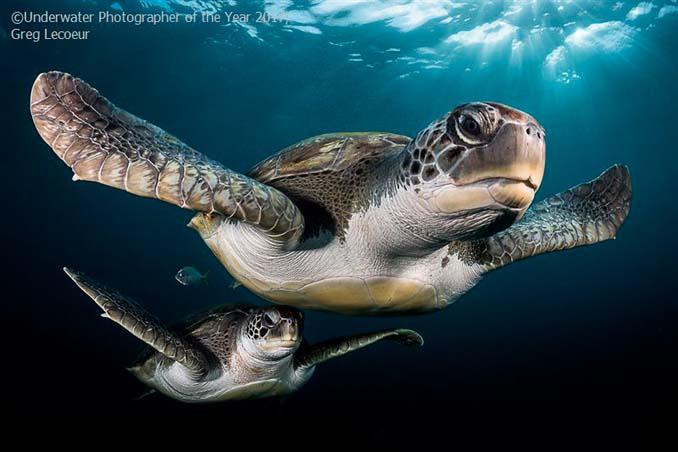 33 από τις κορυφαίες υποβρύχιες φωτογραφίες της χρονιάς (22)