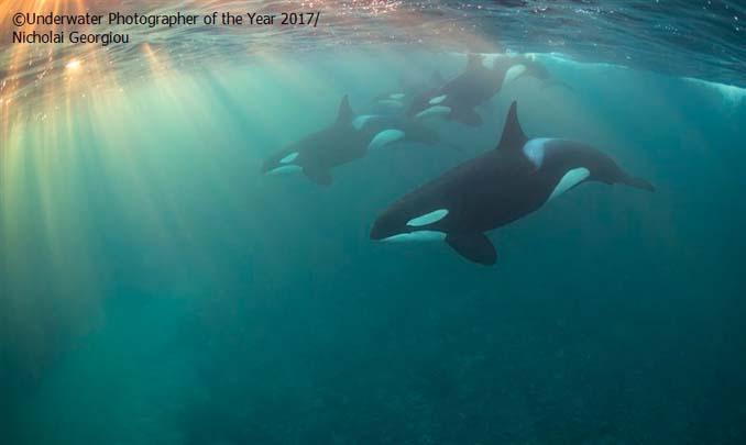 33 από τις κορυφαίες υποβρύχιες φωτογραφίες της χρονιάς (27)