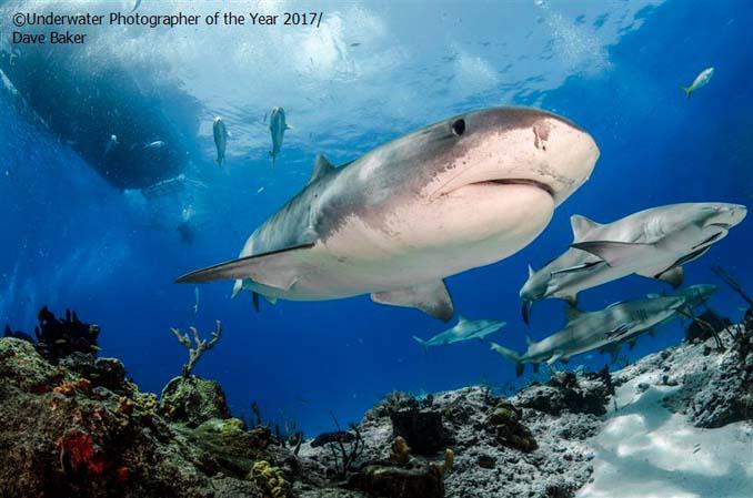 33 από τις κορυφαίες υποβρύχιες φωτογραφίες της χρονιάς (28)