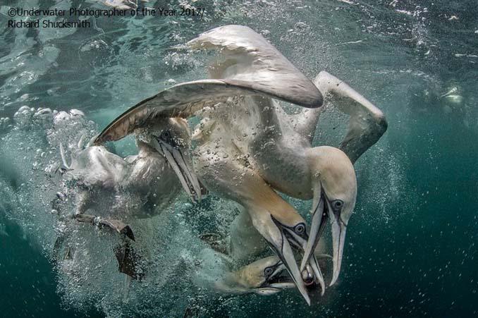 33 από τις κορυφαίες υποβρύχιες φωτογραφίες της χρονιάς (30)