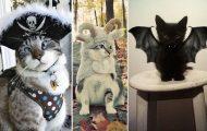 20 ξεκαρδιστικές αποκριάτικες μεταμφιέσεις για γάτες