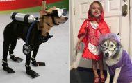 32 ξεκαρδιστικές αποκριάτικες μεταμφιέσεις για σκύλους