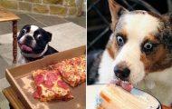 Ξεκαρδιστικές φωτογραφίες σκύλων που δεν μπορούν να αντισταθούν στις λιχουδιές (4)