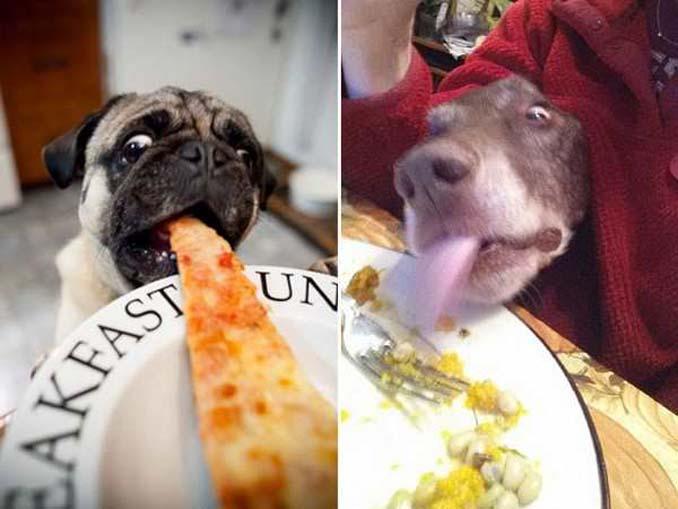 Ξεκαρδιστικές φωτογραφίες σκύλων που δεν μπορούν να αντισταθούν στις λιχουδιές (6)