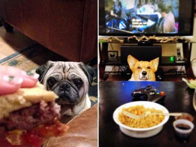 Ξεκαρδιστικές φωτογραφίες σκύλων που δεν μπορούν να αντισταθούν στις λιχουδιές (8)