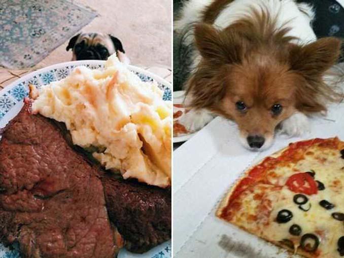 Ξεκαρδιστικές φωτογραφίες σκύλων που δεν μπορούν να αντισταθούν στις λιχουδιές (10)