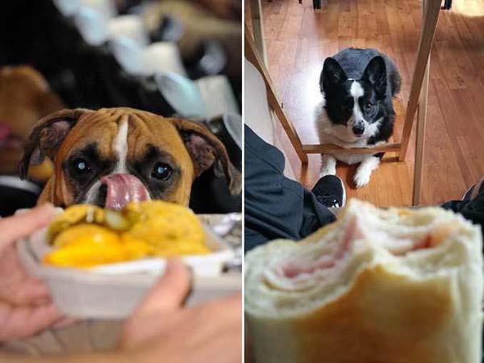 Ξεκαρδιστικές φωτογραφίες σκύλων που δεν μπορούν να αντισταθούν στις λιχουδιές (12)