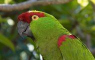 Μερικές φορές οι παπαγάλοι δεν είναι τόσο αθώοι όσο νομίζουμε... (1)