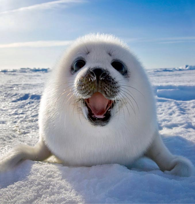 Το πιο γλυκό καλωσόρισμα στη Γροιλανδία | Φωτογραφία της ημέρας
