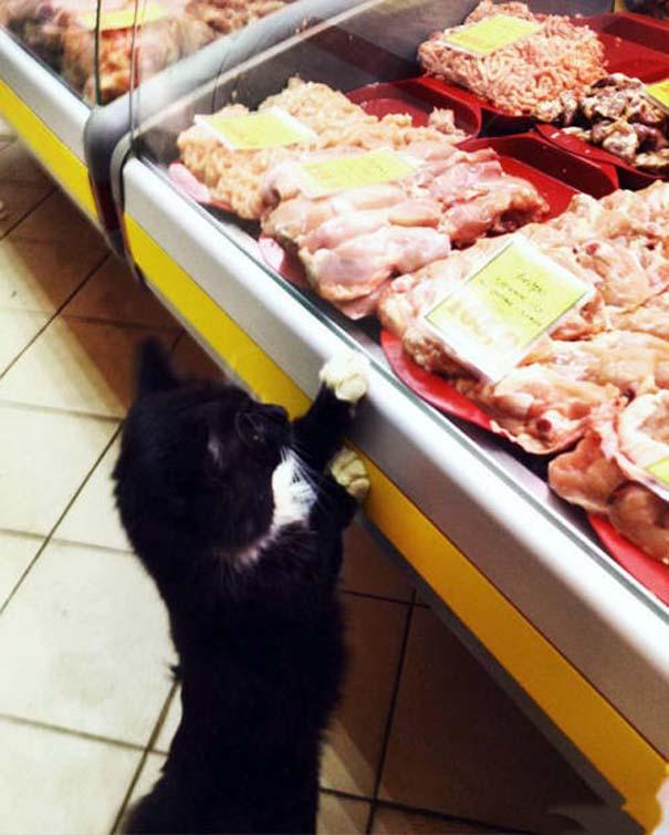 Ποτέ δεν ξέρεις τι μπορεί να συναντήσεις όταν πας στο σούπερ μάρκετ (23)