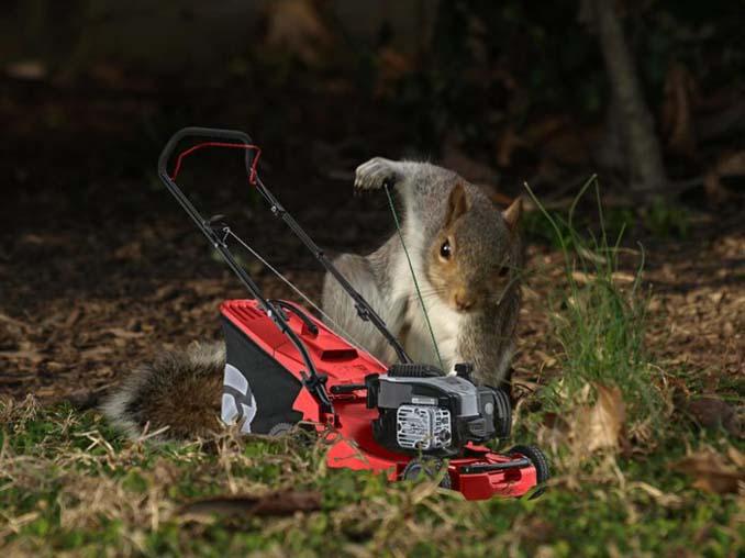 Σκίουρος σε πόζα σούπερ ήρωα έγινε αφορμή για ένα ξεκαρδιστικό Photoshop Battle (13)