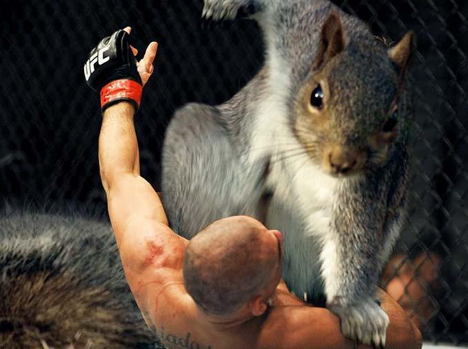 Σκίουρος σε πόζα σούπερ ήρωα έγινε αφορμή για ένα ξεκαρδιστικό Photoshop Battle (15)