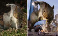 Σκίουρος σε πόζα σούπερ ήρωα έγινε αφορμή για ένα ξεκαρδιστικό Photoshop Battle