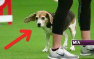 Σκύλος αποσπάται εύκολα