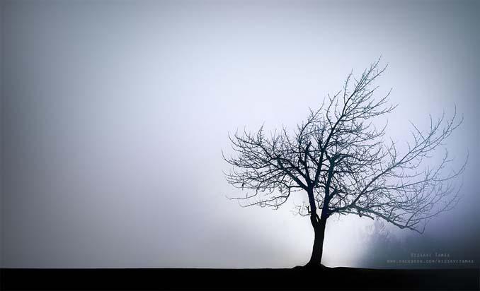 Φωτογράφος αφιέρωσε τέσσερα χρόνια απαθανατίζοντας τη Βουδαπέστη στην ομίχλη (17)