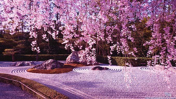 Ανθισμένες κερασιές σε νυχτερινές φωτογραφίες (2)