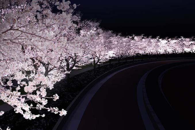 Ανθισμένες κερασιές σε νυχτερινές φωτογραφίες (5)
