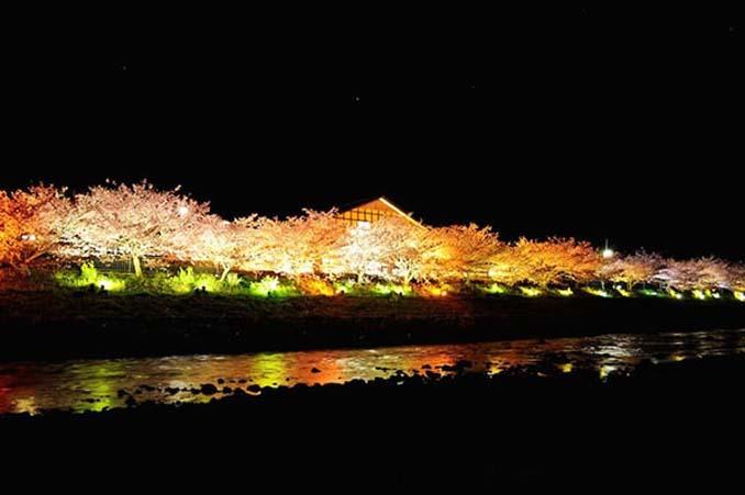 Ανθισμένες κερασιές σε νυχτερινές φωτογραφίες (8)