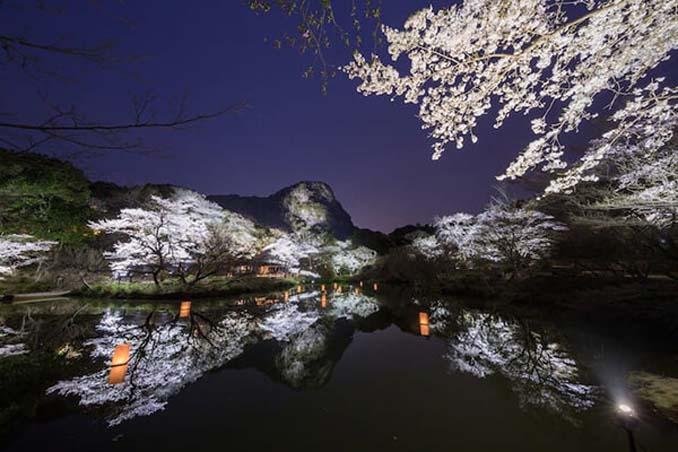 Ανθισμένες κερασιές σε νυχτερινές φωτογραφίες (9)