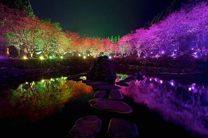 Ανθισμένες κερασιές σε νυχτερινές φωτογραφίες (10)
