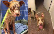 Απίστευτες φωτογραφίες ζώων πριν και μετά την υιοθεσία (23)