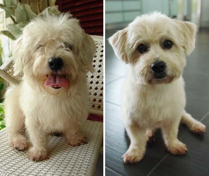 Απίθανες φωτογραφίες σκύλων πριν και μετά το κούρεμα (5)