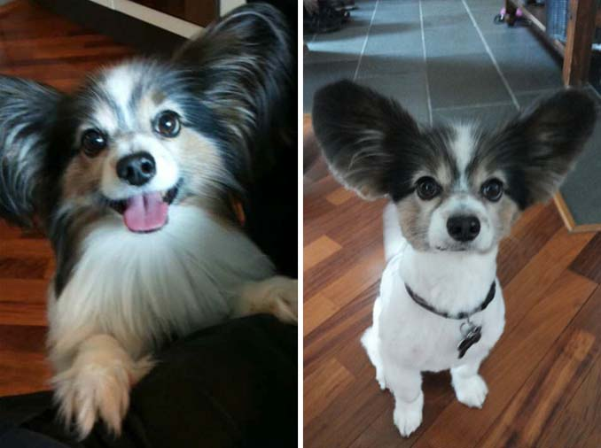 Απίθανες φωτογραφίες σκύλων πριν και μετά το κούρεμα (6)