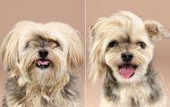 Απίθανες φωτογραφίες σκύλων πριν και μετά το κούρεμα (1)