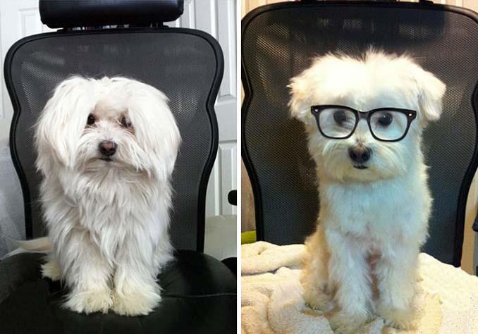 Απίθανες φωτογραφίες σκύλων πριν και μετά το κούρεμα (12)