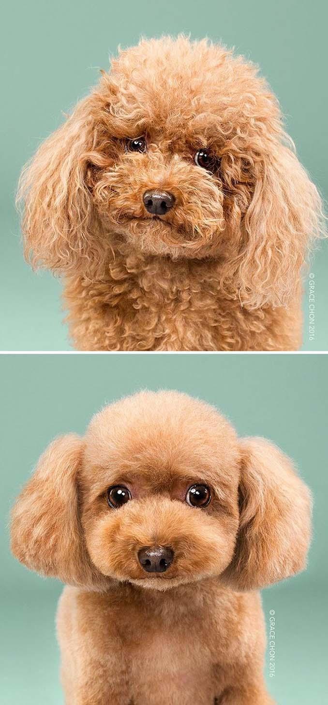 Απίθανες φωτογραφίες σκύλων πριν και μετά το κούρεμα (15)