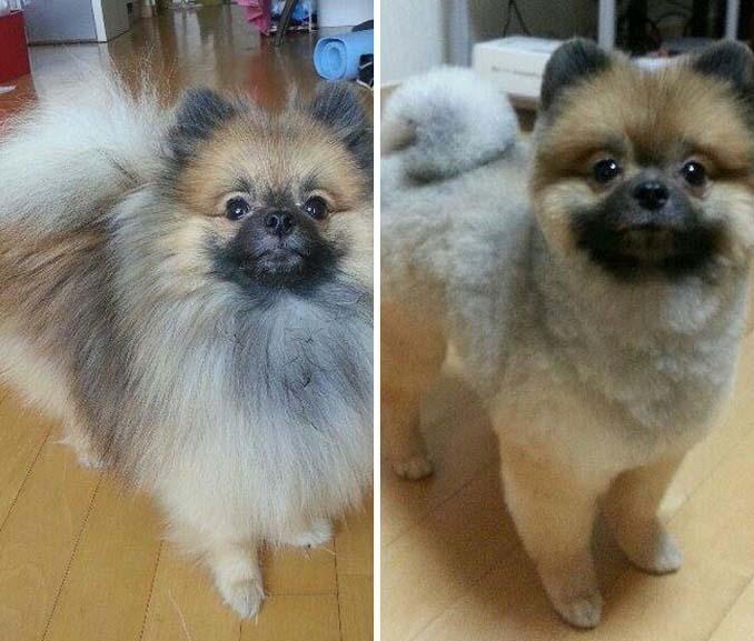 Απίθανες φωτογραφίες σκύλων πριν και μετά το κούρεμα (16)