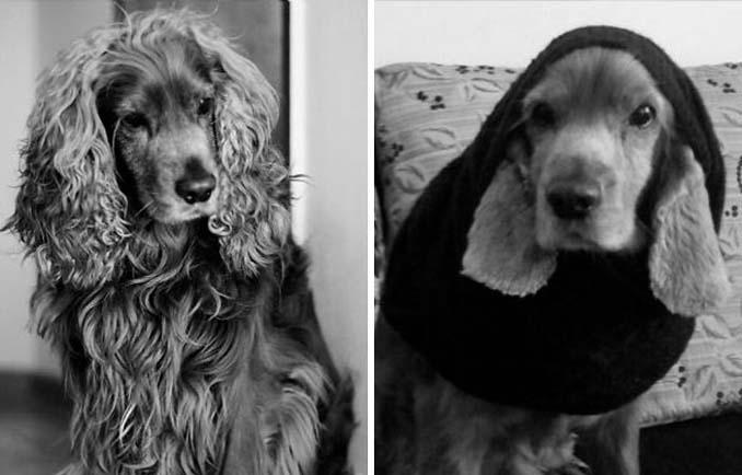Απίθανες φωτογραφίες σκύλων πριν και μετά το κούρεμα (17)