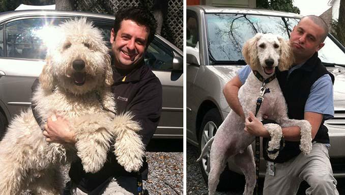 Απίθανες φωτογραφίες σκύλων πριν και μετά το κούρεμα (18)