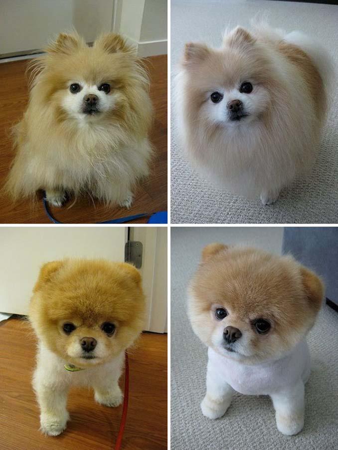 Απίθανες φωτογραφίες σκύλων πριν και μετά το κούρεμα (20)