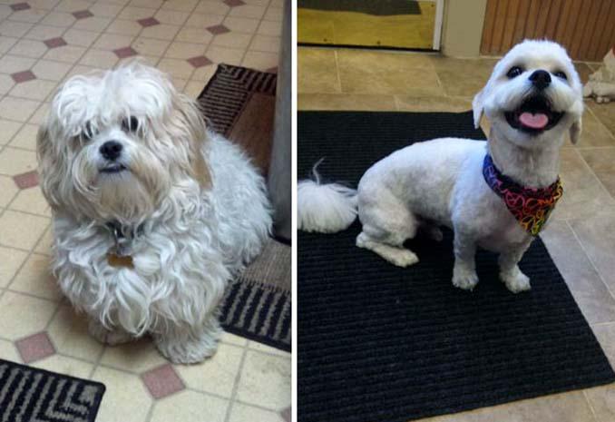 Απίθανες φωτογραφίες σκύλων πριν και μετά το κούρεμα (23)