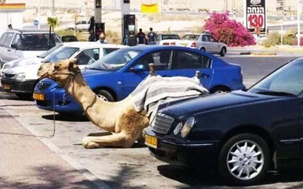 Εν τω μεταξύ, στο Ισραήλ... (4)