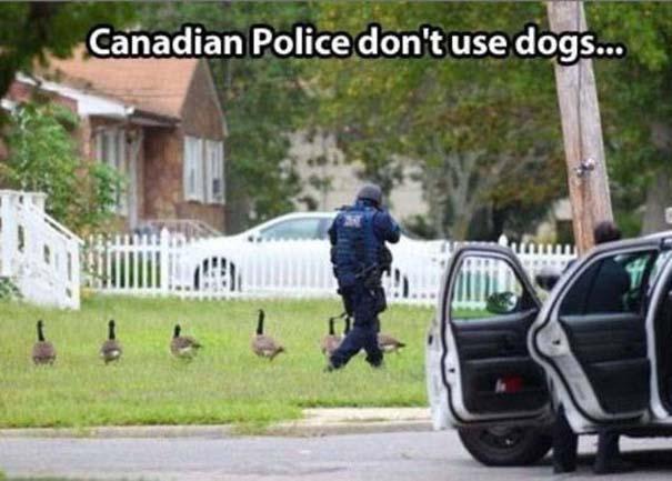 Εν τω μεταξύ, στον Καναδά... #21 (8)