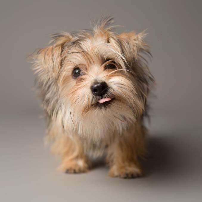 Τα απίθανα πορτραίτα ενός φωτογράφου σκύλων που ειδικεύεται στις αστείες γκριμάτσες (2)