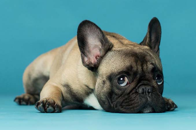 Τα απίθανα πορτραίτα ενός φωτογράφου σκύλων που ειδικεύεται στις αστείες γκριμάτσες (7)