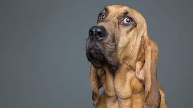 Τα απίθανα πορτραίτα ενός φωτογράφου σκύλων που ειδικεύεται στις αστείες γκριμάτσες (8)