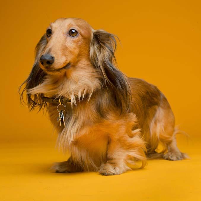 Τα απίθανα πορτραίτα ενός φωτογράφου σκύλων που ειδικεύεται στις αστείες γκριμάτσες (9)