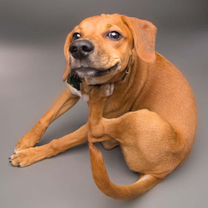 Τα απίθανα πορτραίτα ενός φωτογράφου σκύλων που ειδικεύεται στις αστείες γκριμάτσες (11)